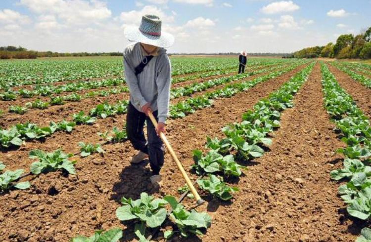 Evento discutirá as transformações que a blockchain pode trazer para a agricultura no Brasil