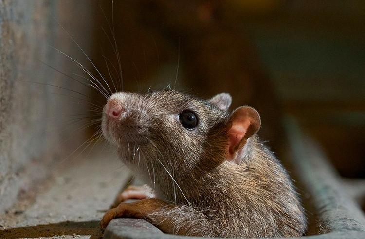 Se o Bitcoin é veneno de rato, os bancos são os ratos que temos que exterminar, diz CEO da Pantera Capital