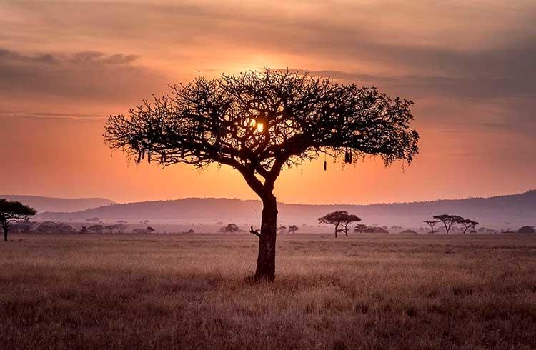 Maior exchange do mundo foca em expandir suas operações para a África