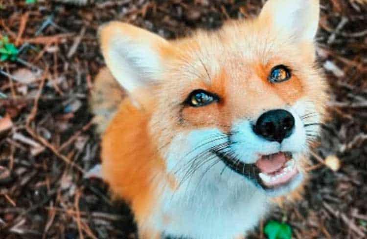 Foxbit faz parceria com gestora de criptomoedas e oferece novo serviço aos seus usuários