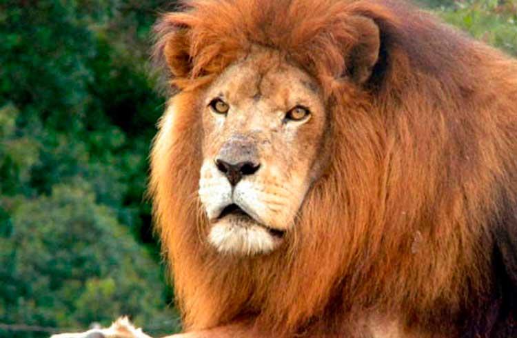 Exchange brasileira LionBit desaparece e clientes perdem tudo