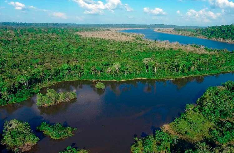 Brasileiro quer usar blockchain para explorar a Floresta Amazônica