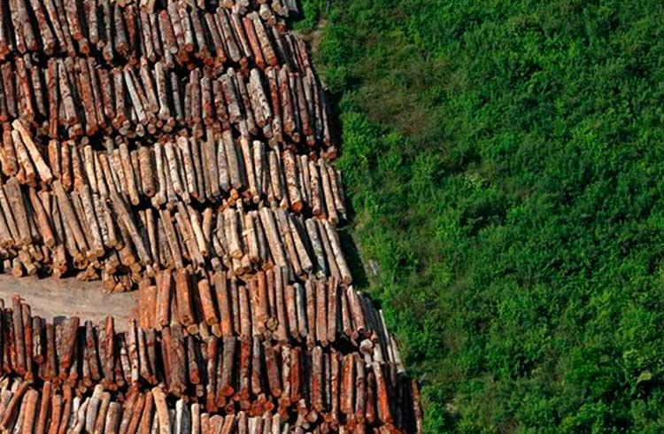 Contra o desmatamento da Amazônia, BVRio usa blockchain do Ethereum