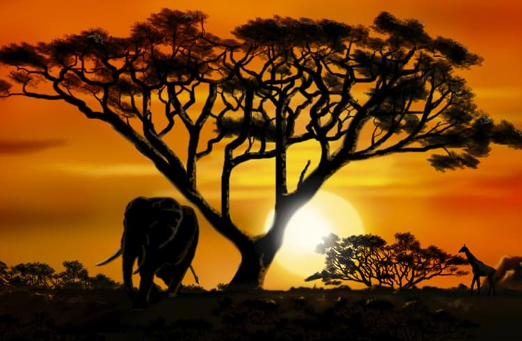 Startup usa blockchain para combater desmatamento na África