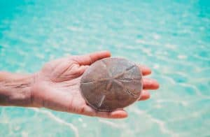 Banco Central das Bahamas lançará piloto do Sand Dollar