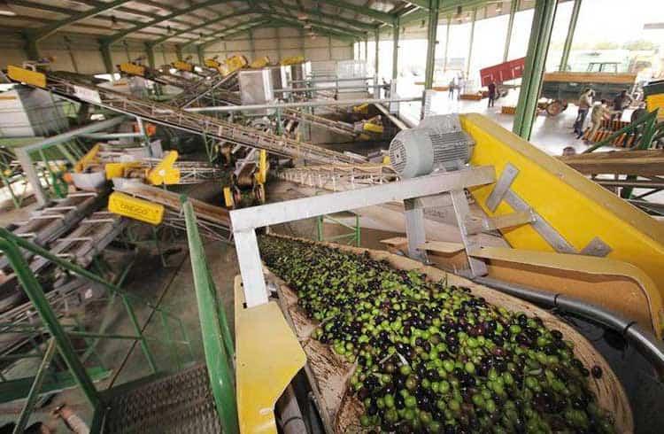 Maior produtor de azeite do mundo anuncia adição de blockchain para rastrear azeitona