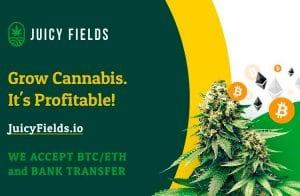Aumente seus lucros com a pioneira plataforma de cultivo legal de cannabis JuicyFields