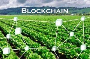 Iniciativa brasileira de blockchain recebe financiamento para incentivar produção sustentável
