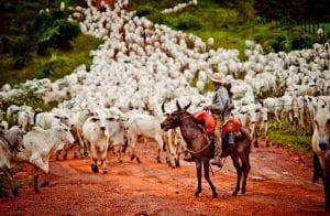Plataforma blockchain vai rastrear o gado no Pará