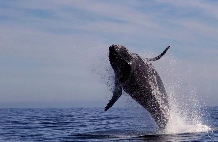 """Número de endereços de """"baleias"""" de Bitcoin atinge maior número desde agosto"""