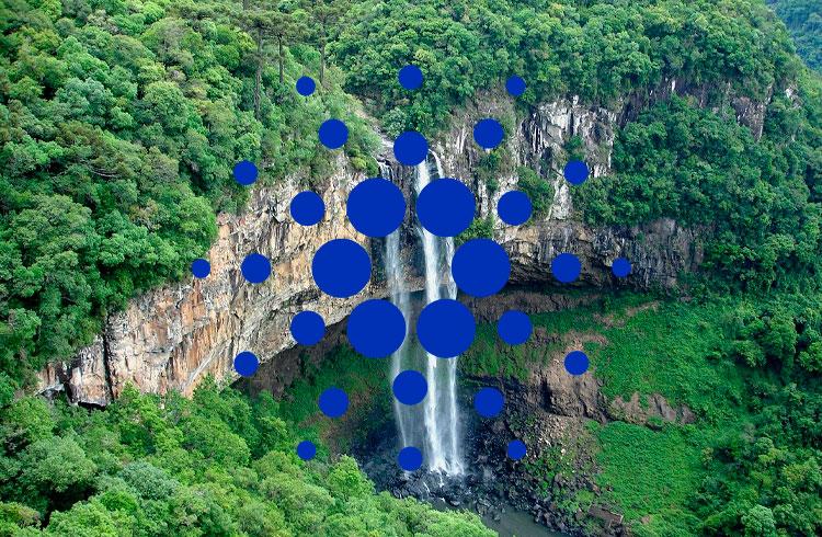 Pool de participação da Cardano quer ajudar fauna brasileira