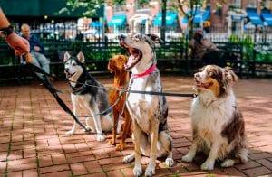 Canil aberto: clones da Dogecoin disparam até 14.000%