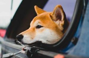 Ganho dos mineradores de Dogecoin cresce 4.500% em 2021