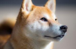Clone da Dogecoin dispara 100% em apenas 24 horas